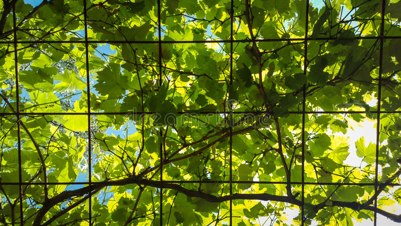 Leuchtende Blätter lizenzfreie stockfotografie
