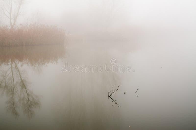Leuchtender Nebel in der Morgensonne (2) stockbilder