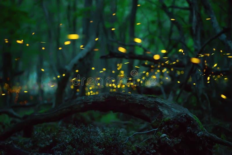 Leuchtkäfer im Sommer lizenzfreie stockbilder