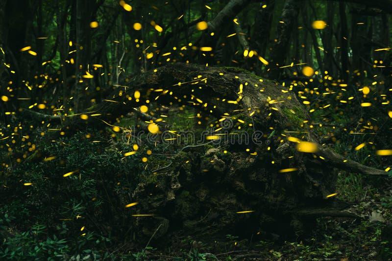 Leuchtkäfer im Sommer am Wald lizenzfreie stockfotos