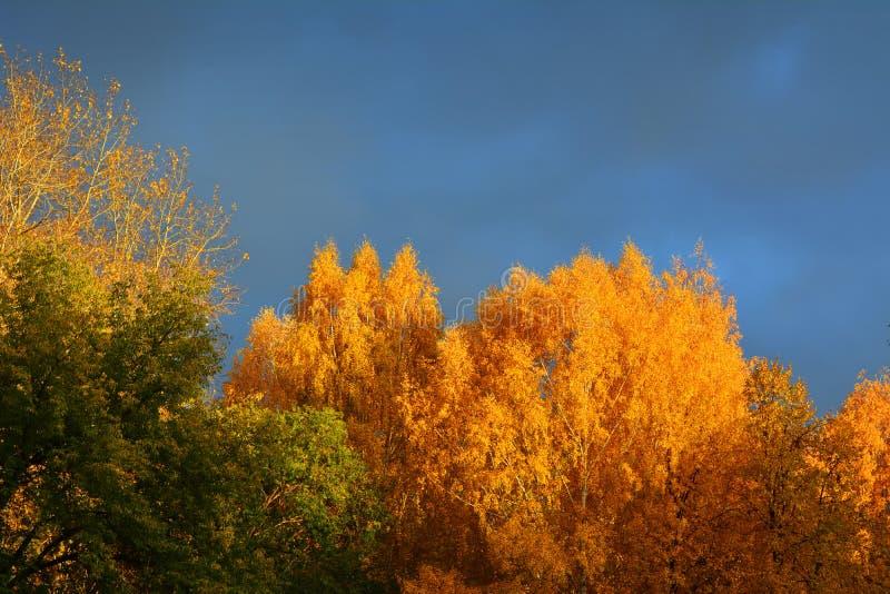 Leuchtorange- und Grünlaub von Bäumen im Herbst gegen Wolkenhimmel lizenzfreies stockfoto