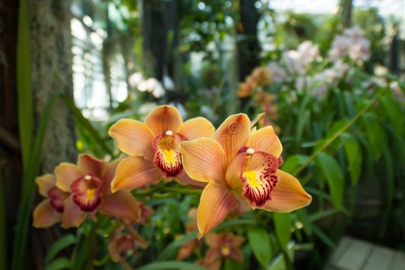 Leuchtorangeorchideen in einem tropischen Wald lizenzfreie stockfotos