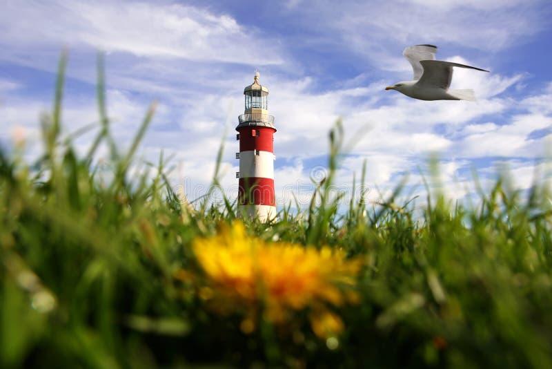 Leuchtturm mit Löwenzahn und Vogel in Plymouth, Großbritannien stockbild