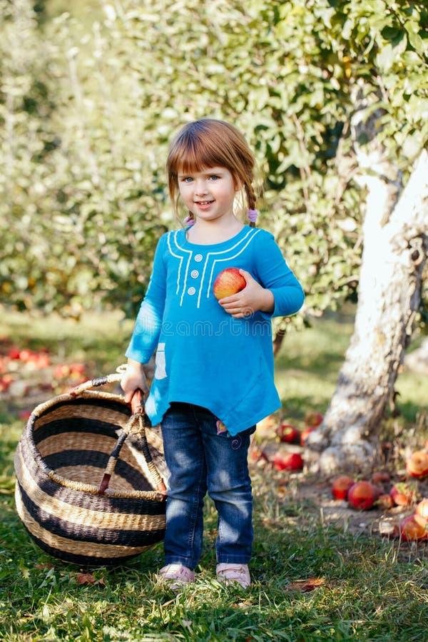 leuk aanbiddelijk weinig roodharig Kaukasisch meisjeskind die met blauwe ogen appelen in tuin op landbouwbedrijf plukken stock foto