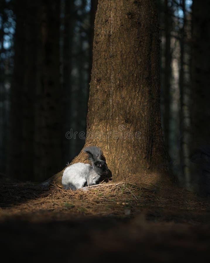 Leuk angora konijntje royalty-vrije stock foto