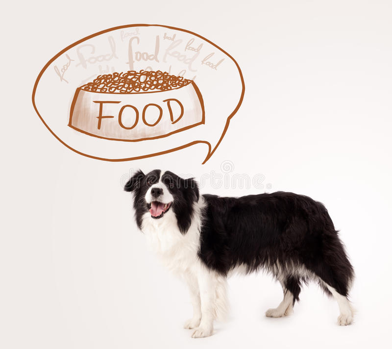 Leuk border collie die over voedsel dromen stock fotografie