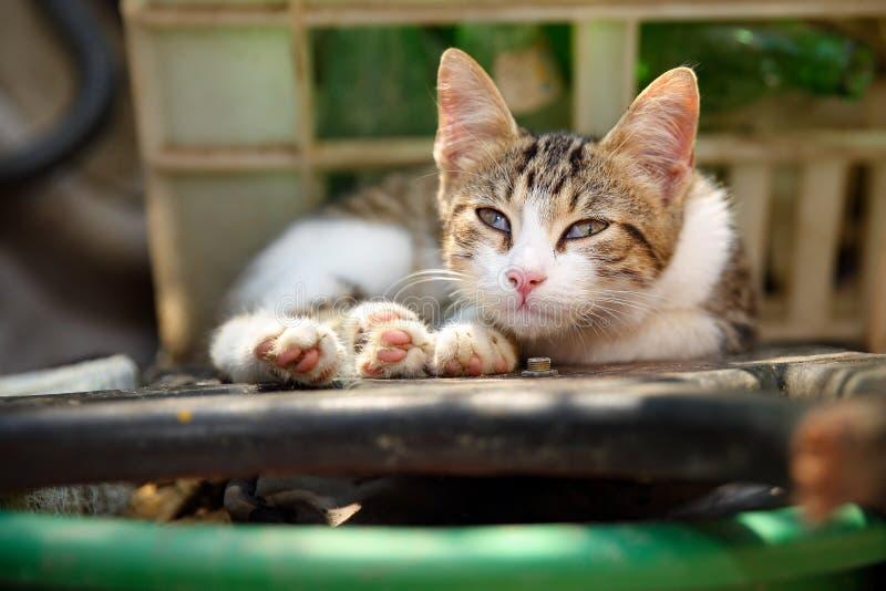 Leuk dakloos katje met gedeeltelijk gesloten derde ooglid, buiten liggend, kijkend droevig en misarble royalty-vrije stock afbeelding