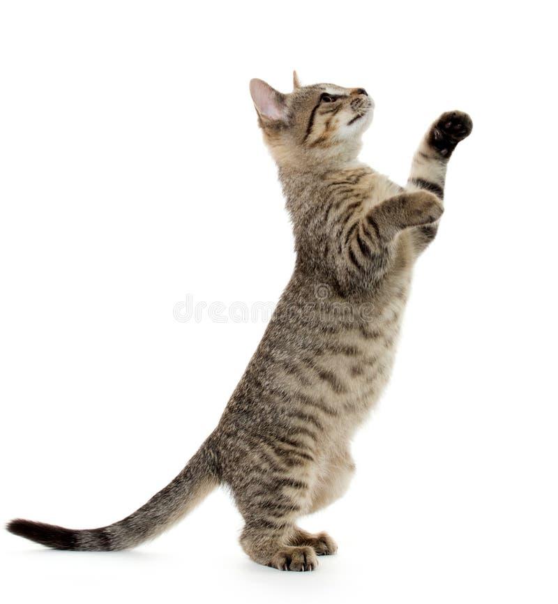 Leuk gestreepte katkatje royalty-vrije stock afbeeldingen