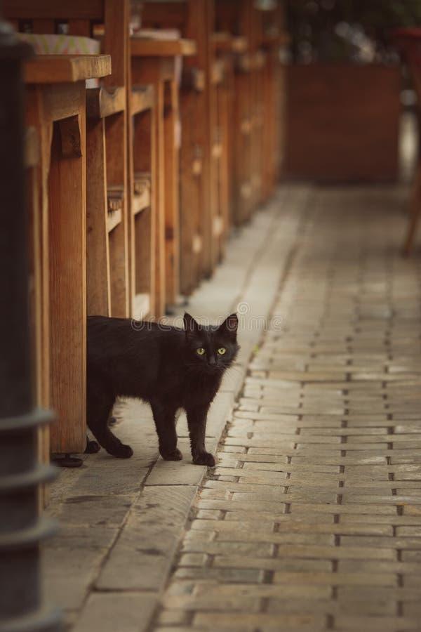 Leuk gestreepte katkatje die door een houten omheining gluren stock afbeeldingen