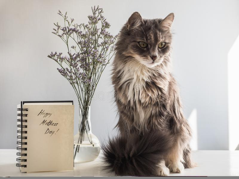 Leuk, grijs, pluizig katje stock afbeeldingen