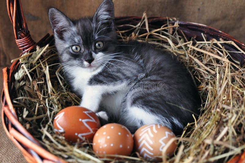Leuk grijs weinig katje in een rieten mand en paaseieren van natuurlijke rode kleur met grafisch patroon van witte verf op retro royalty-vrije stock foto's