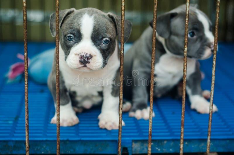 Leuk hond openluchtschot royalty-vrije stock foto's