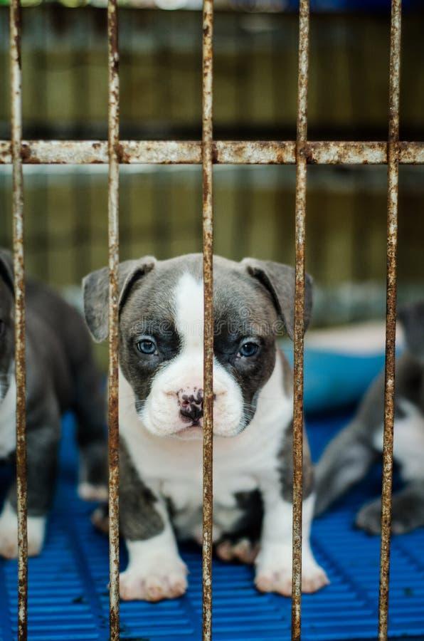 Leuk hond openluchtschot stock foto