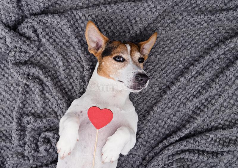 Leuk jong hondhuisdier met rood hart stock afbeeldingen