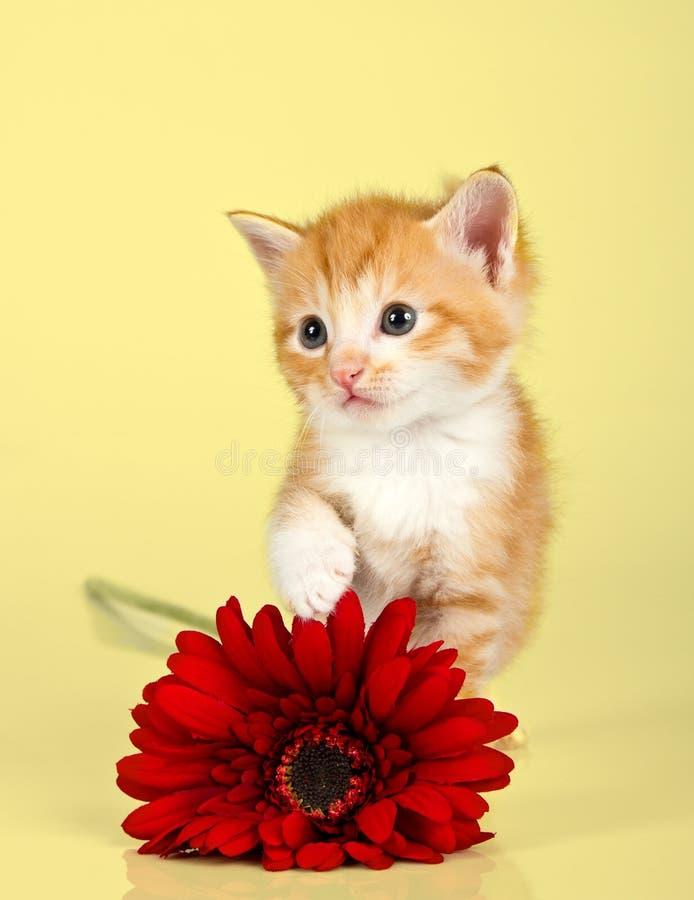 Leuk katje die een rode bloem toughing stock fotografie