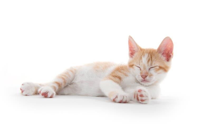 Leuk katje die ith gesloten ogen bepalen stock foto's