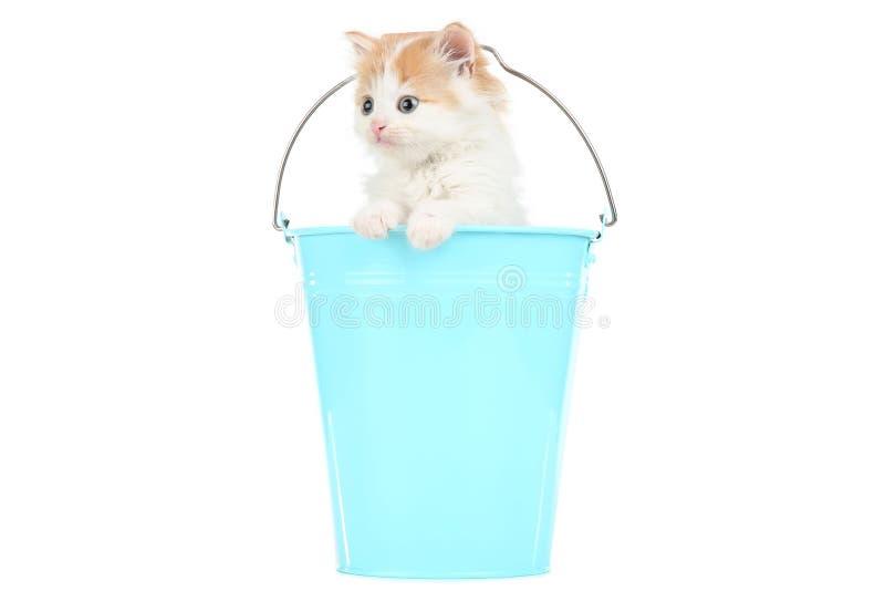 Leuk katje in emmer stock foto's