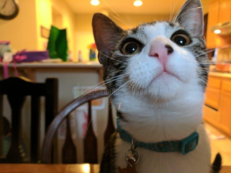 Leuk katje op lijst royalty-vrije stock afbeeldingen