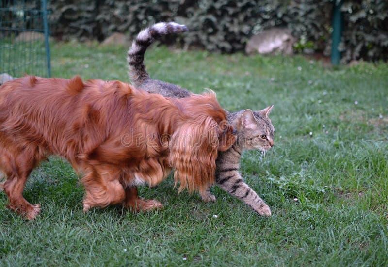 Leuk katje van een hond en gestreepte kat samen stock afbeeldingen