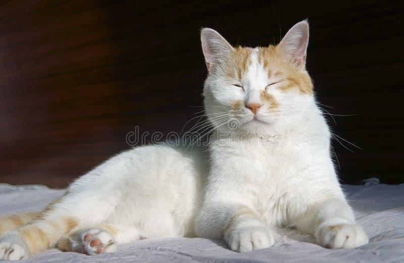 Leuk kattendutje stock afbeeldingen