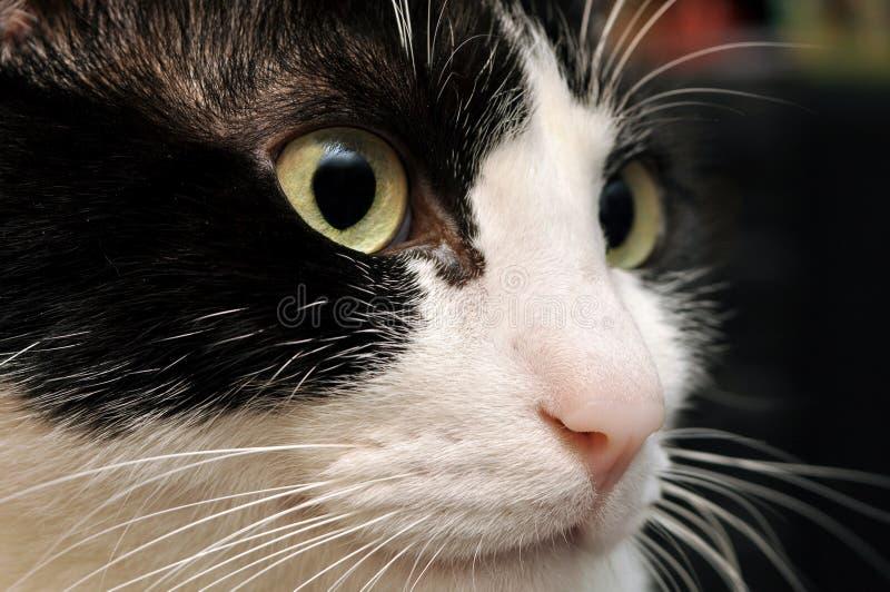 Leuk kattengezicht royalty-vrije stock fotografie