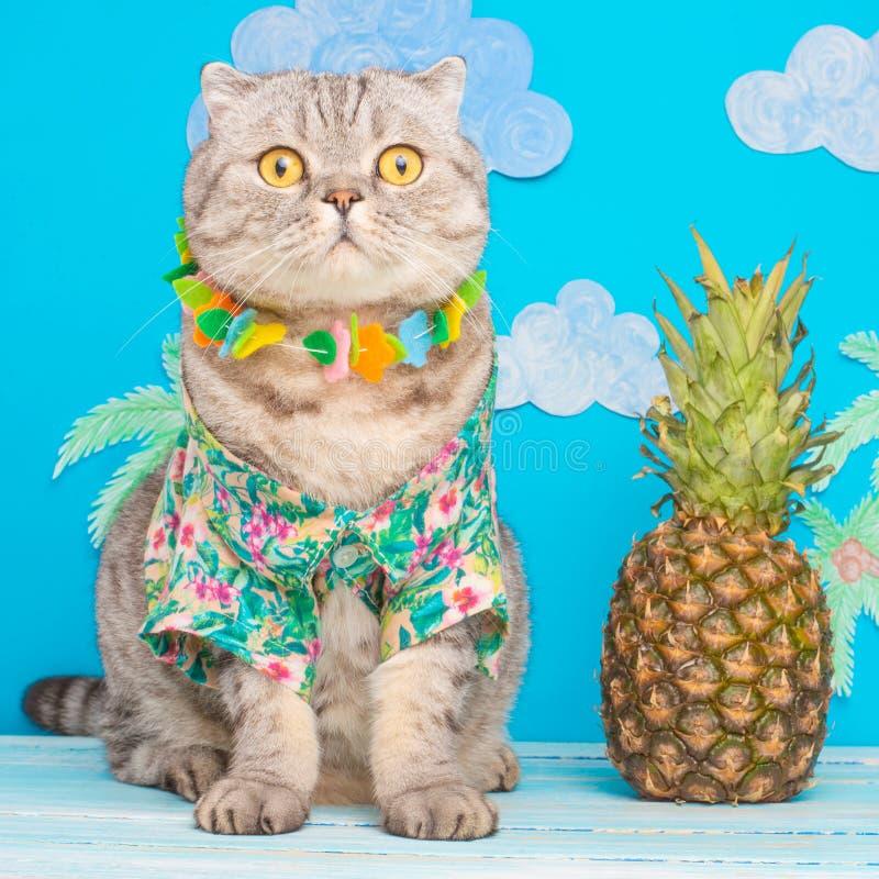 Leuk kattenoverhemd op vakantie tegen de achtergrond van ananas en palmen Het concept rust, ontspanning en reis royalty-vrije stock afbeeldingen