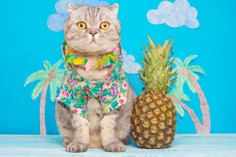 Leuk kattenoverhemd op vakantie tegen de achtergrond van ananas en palmen Het concept rust, ontspanning en reis stock foto's