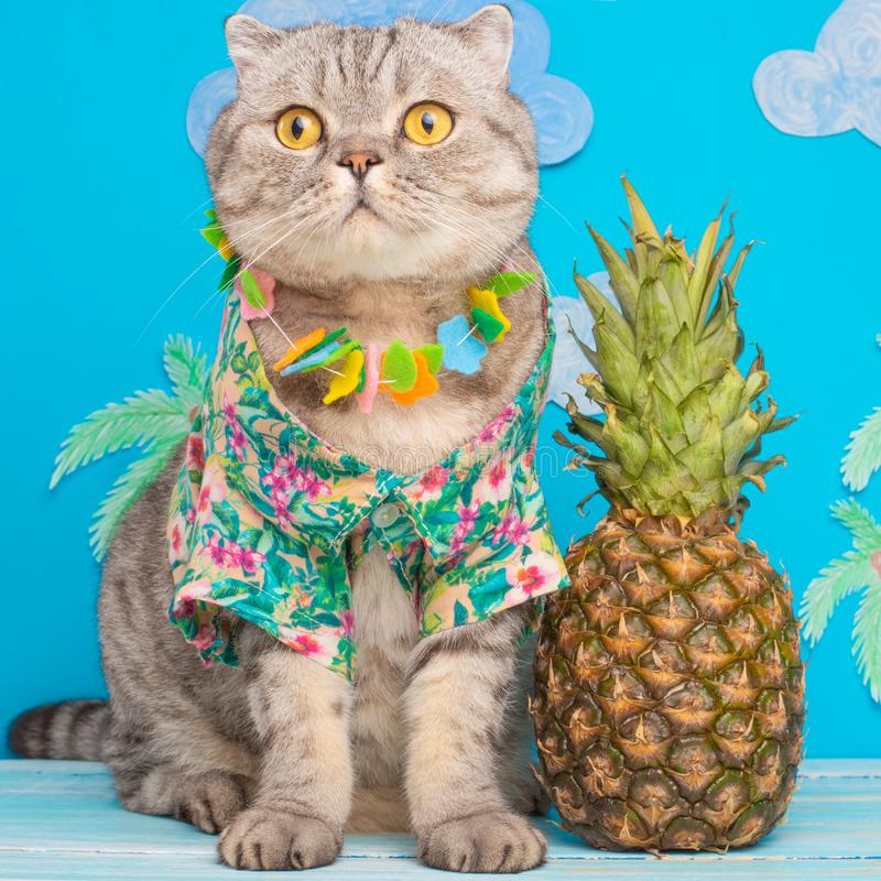 Leuk kattenoverhemd op vakantie tegen de achtergrond van ananas en palmen Het concept rust, ontspanning en reis stock afbeeldingen