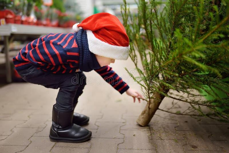 Leuk kiest weinig jongen Kerstmisboom op markt Familiekerstmis het Winkelen stock afbeeldingen