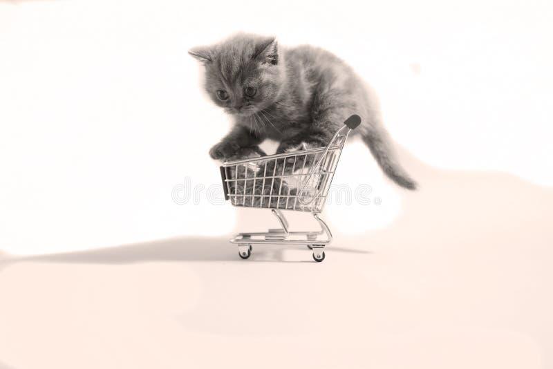 Leuk klein katje royalty-vrije stock foto's