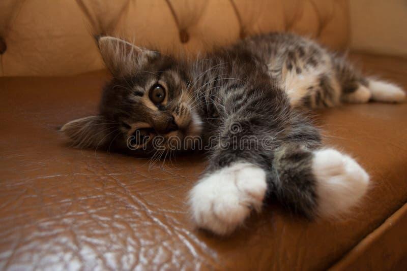 Leuk klein katje die op leerlaag liggen stock afbeelding