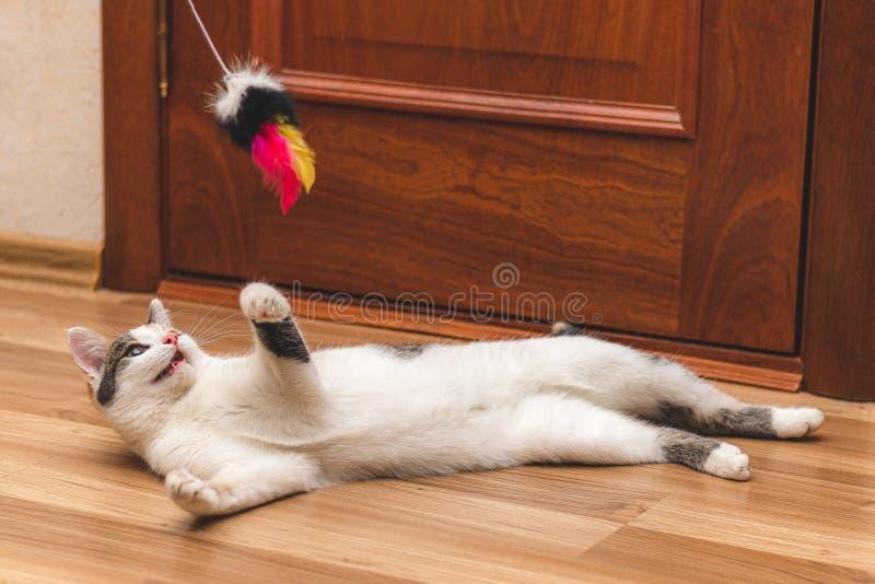 Leuk kleurrijk katje dat op de vloer ligt en met een stuk speelgoed speelt stock foto