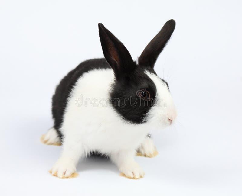 Leuk konijntje royalty-vrije stock fotografie