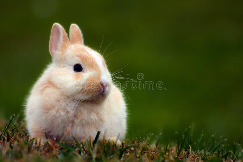 Leuk konijntje in gras royalty-vrije stock afbeelding