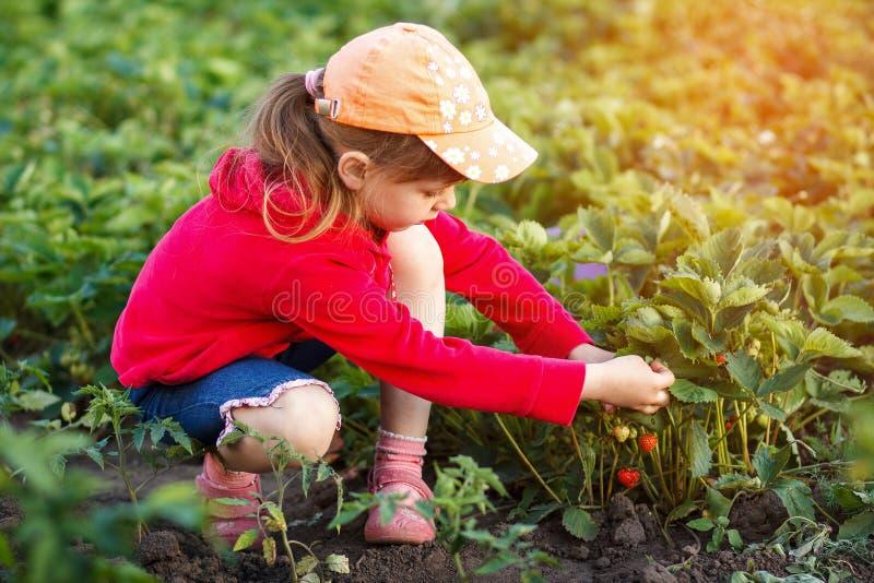 Leuk meisje die verse aardbeien op warme en zonnige de zomerdag plukken stock foto