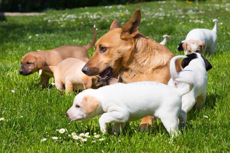 Leuk mengen-ras weinig hondfamilie stock afbeelding