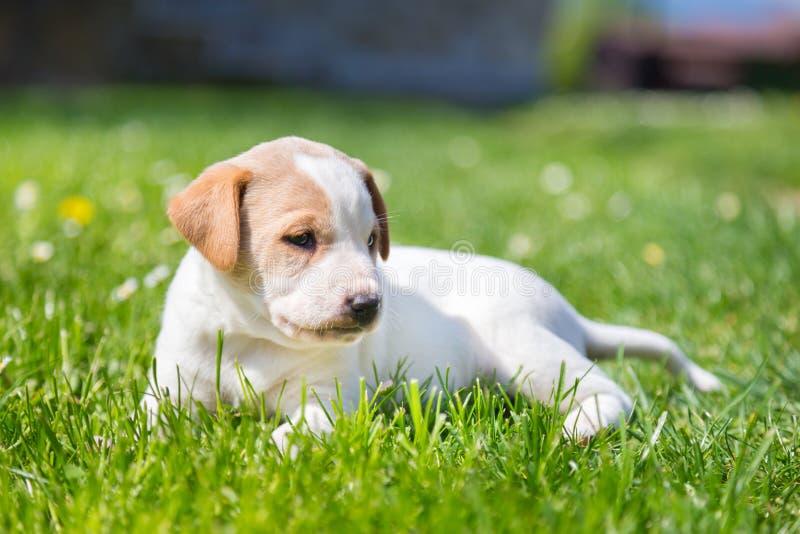Leuk mengen-ras weinig puppy op gras stock afbeelding