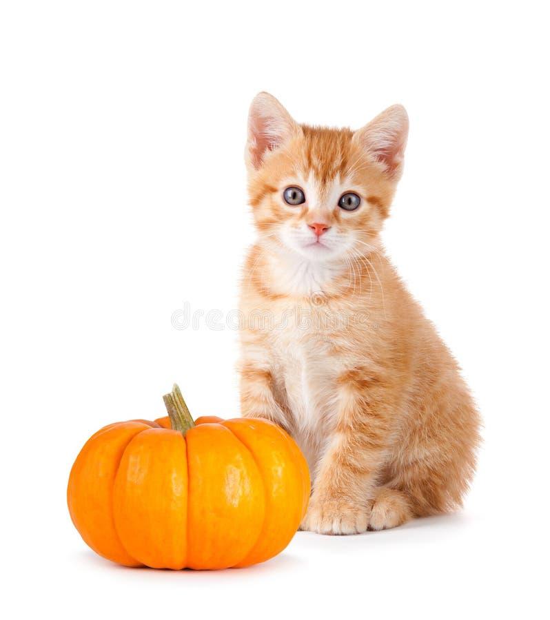 Leuk oranje katje met minipompoen op wit royalty-vrije stock afbeelding
