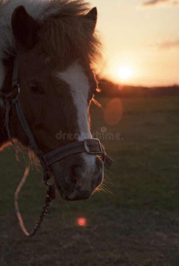 Leuk paard bij zonsondergang royalty-vrije stock fotografie