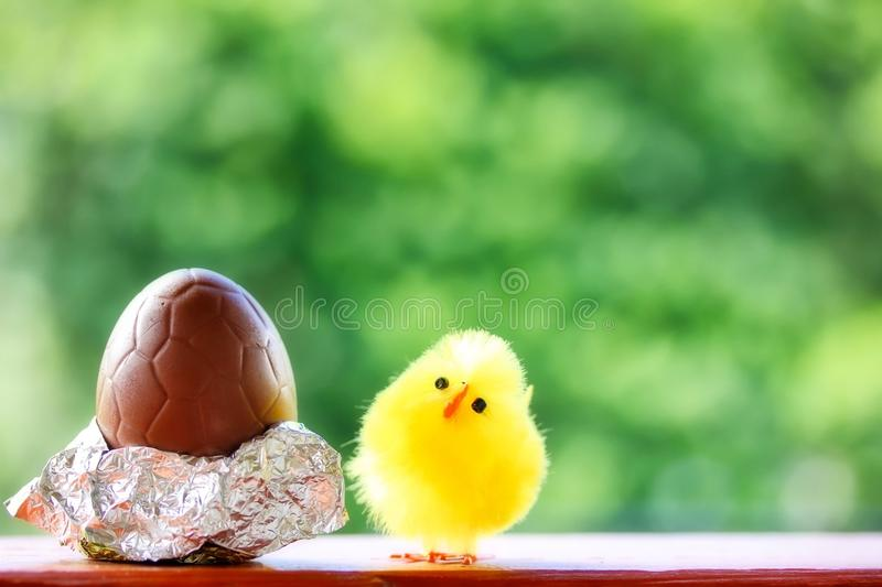 Leuk Pluizig Chick And Chocolate Egg For Pasen royalty-vrije stock afbeeldingen