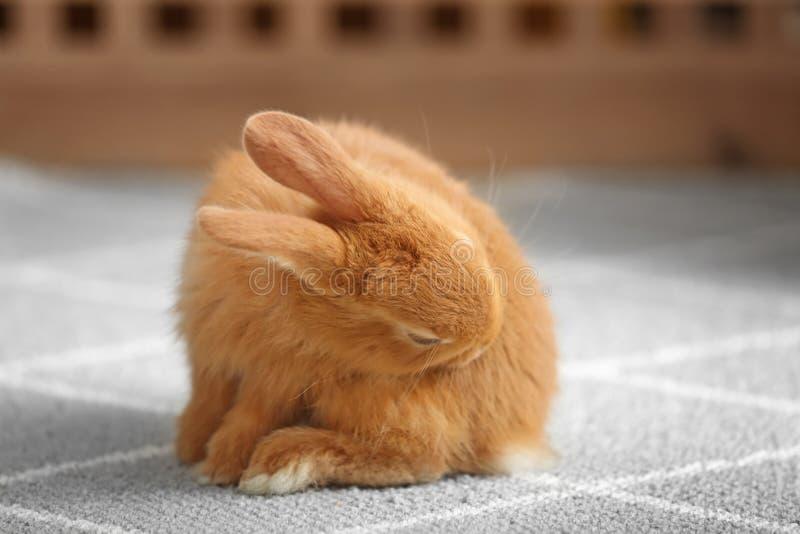 Leuk pluizig konijntje op vloer thuis royalty-vrije stock fotografie