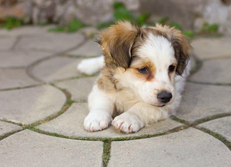Leuk puppy dat op bestrating legt stock afbeelding