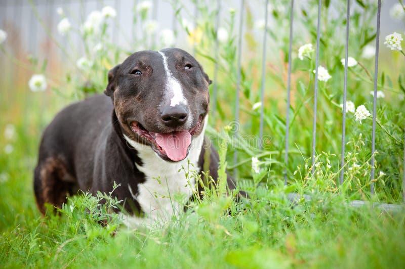 Leuk puppy dat in openlucht ligt royalty-vrije stock fotografie