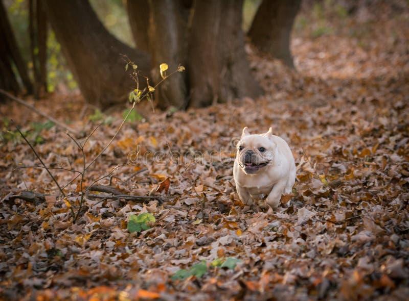 leuk puppy die buiten lopen stock foto's
