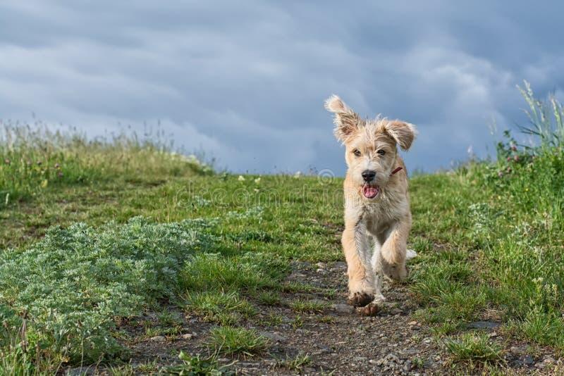 Leuk puppy die in het gras lopen stock foto's
