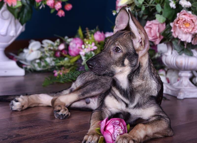 Leuk puppy die op de vloer met bloemen liggen stock afbeeldingen