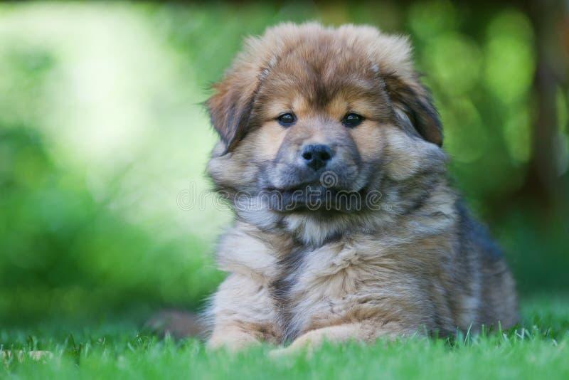 Leuk puppy Elo stock foto