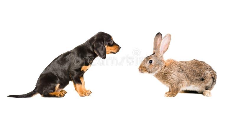 Leuk puppy en konijn stock afbeelding