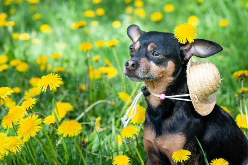 Leuk puppy, hond in de lente gele kleuren op een gebloeide weide, portret van een hond stock foto