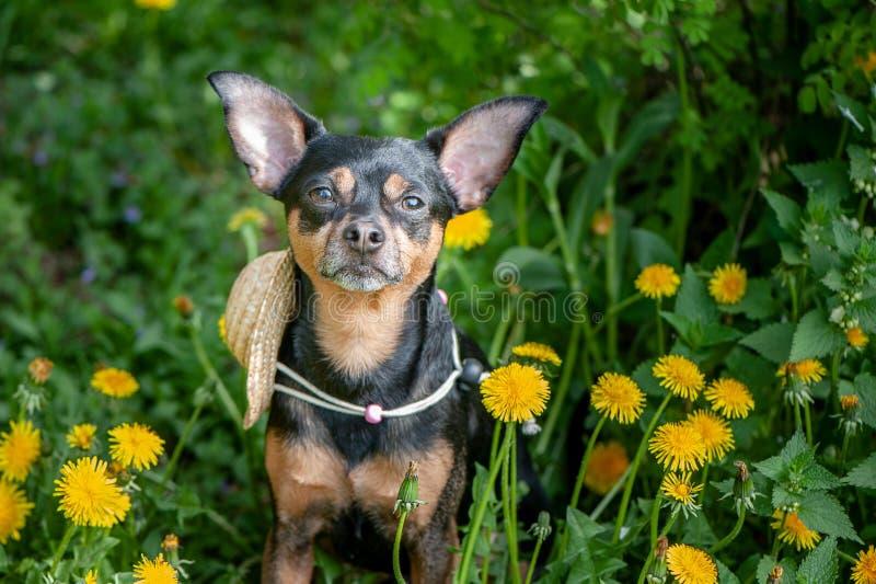 Leuk puppy, hond in de lente gele kleuren op een gebloeide weide, portret van een hond De de lentezomer stock foto
